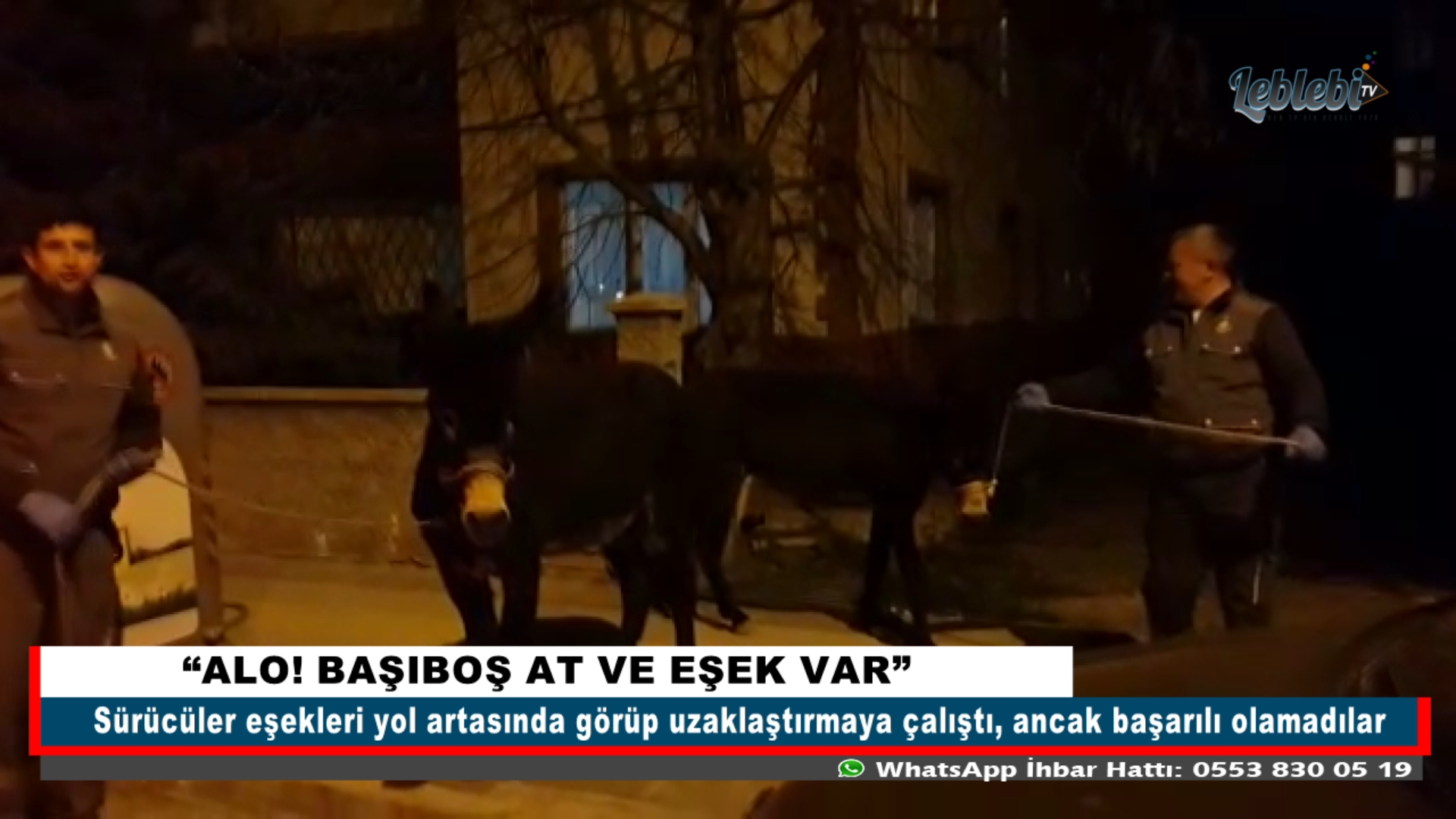 """""""ALO! BAŞIBOŞ AT VE EŞEK VAR"""""""