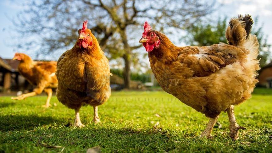 Tavuk Yerine Elini Kesti