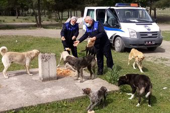 Osmancık Belediyesi Sahipsiz Hayvanları Doyurdu