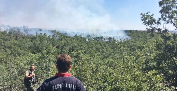 Sungurlu ve Alaca Arasındaki Ormanlık Alanda Yangın