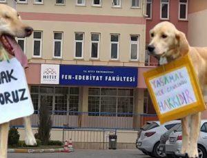 Dekandan Skandal Paylaşım, Hayvanseverleri Alçaklıkla Suçladı!